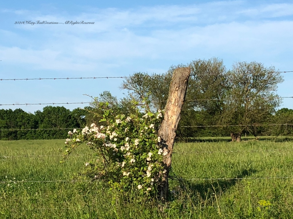 Barbed Wire and Roses